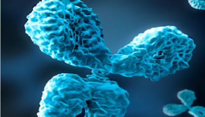 Free SARS-CoV-2 Focused Sample-Size Antibodies