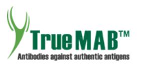 TrueMAB™ Antibodies of OriGene